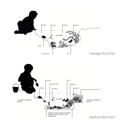 Average rock pool vs Biorock Rock Pool